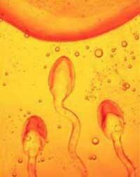 Десять мифов о контрацепции