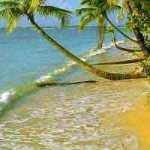 Сила Жизни и здоровья, на берегу моря