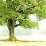 Восстановление тела, под деревом