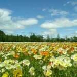 Счастье, на солнечной поляне