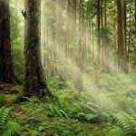 Радость и обновление, в весеннем лесу