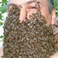 Клинические проявления действия пчелиного яда