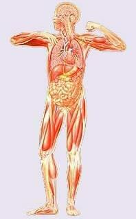 Причины зашлакованости нашего организма