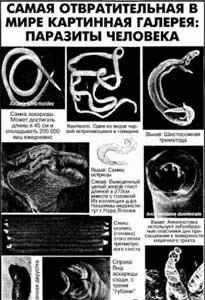 Паразиты тела