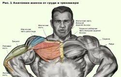Анатомия жимов от груди в тренажере
