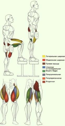Работа мышц и суставов во время подъемов на опору