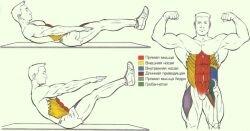 Работа мышц и суставов во время V-Подъемов